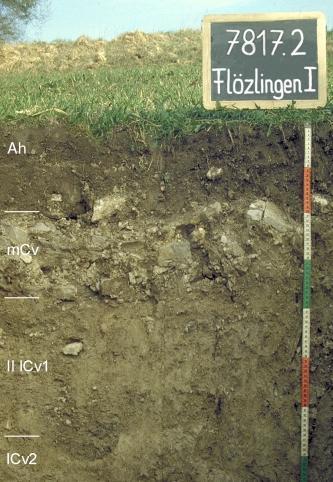 Das Foto zeigt ein Bodenprofil unter Grünland. Es handelt sich um ein Musterprofil des LGRB. Das vier Horizonte umfassende Profil ist etwa 75 cm tief.
