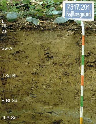 Das Foto zeigt ein Bodenprofil unter Wald. Es handelt sich um ein Musterrpofil des LGRB. Das fünf Horizonte umfassende Profil ist etwa 1 m tief.