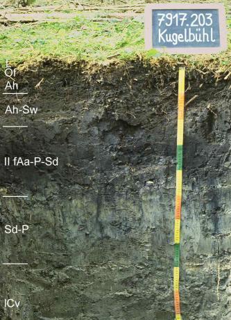 Das Foto zeigt ein Bodenprofil unter Grünland. Es handelt sich um ein Musterprofil des LGRB. Das fünf Horizonte umfassende Profil ist über 1 m tief.