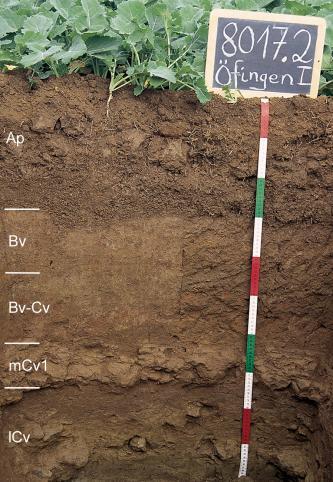 Das Foto zeigt ein Bodenprofil unter Acker. Es handelt sich um ein Musterprofil des LGRB. Das fünf Horizonte umfassende Profil ist 1 m tief.