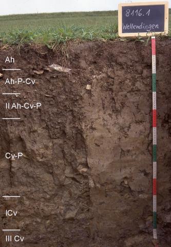 Das Foto zeigt ein Bodenprofil unter Grünland. Es handelt sich um ein Musterprofil des LGRB. Das sechs Horizonte umfassende Bodenprofil ist 1 m tief.