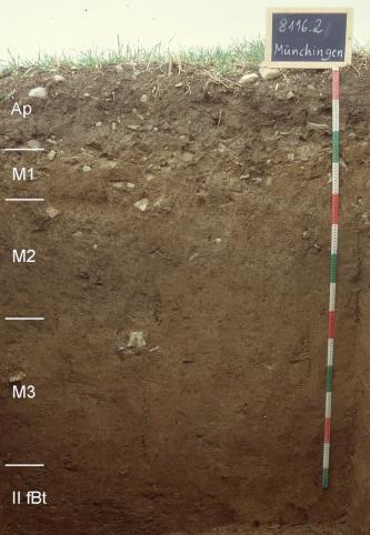 Das Foto zeigt ein Bodenprofil unter Grünland. Es handelt sich um ein Musterprofil des LGRB. Das fünf Horizonte umfassende Bodenprofil ist etwa 1,50 m tief.