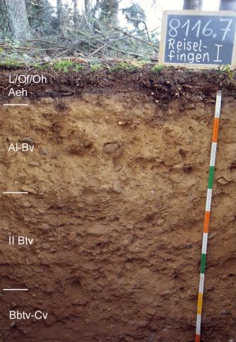 Das Foto zeigt ein Bodenprofil unter Wald. Es handelt sich um ein Musterprofil des LGRB. Das vier Horizonte umfassende Profil ist über 1,10 m tief.