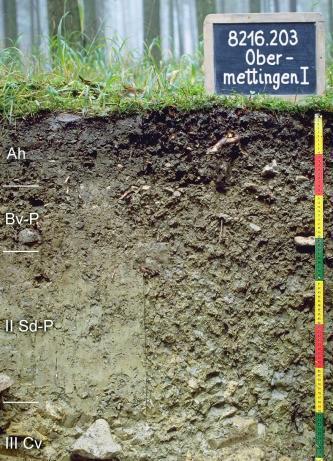 Das Foto zeigt ein Bodenprofil unter Wald. Es handelt sich um ein Musterprofil des LGRB. Das vier Horizonte umfassende Profil ist 80 cm tief.