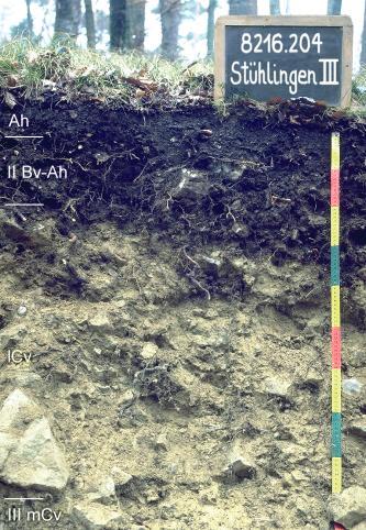 Das Foto zeigt ein Bodenprofil unter Wald. Es handelt sich um ein Musterprofil des LGRB. Das drei Horizonte umfassende, im oberen Drittel sehr dunkle Profil ist 85 cm tief.