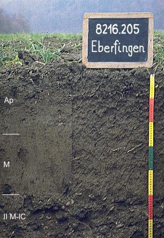 Das Foto zeigt ein Bodenprofil unter Acker. Es handelt sich um ein Musterprofil des LGRB. Das drei Horizonte umfassende Profil ist 70 cm tief.