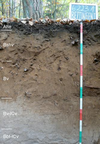 Das Foto zeigt ein Bodenprofil unter Wald. Es handelt sich um ein Musterprofil des LGRB. Das fünf Horizonte umfassende Profil ist 1,10 m tief.