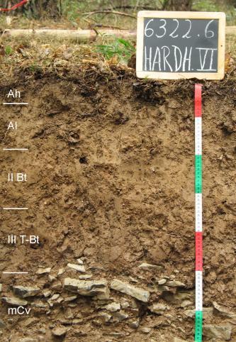 Das Foto zeigt ein Bodenprofil unter Wald. Es handelt sich um ein Musterprofil des LGRB. Das fünf Horizonte umfassende Profil ist 70 cm tief.