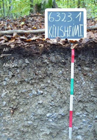 Das Foto zeigt ein Bodenprofil unter Wald. Es handelt sich um ein Musterprofil des LGRB. Das fünf Horizonte umfassende, graubraune Profil ist etwa 60 cm tief.