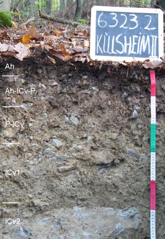 Das Foto zeigt ein Bodenprofil unter Wald. Es handelt sich um ein Musterprofil des LGRB. Das fünf Horizonte umfassende Profil ist 60 cm tief.