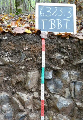 Das Foto zeigt ein Bodenprofil unter Wald. Es handelt sich um ein Musterprofil des LGRB. Das vier Horizonte umfassende, stark steinige Profil ist etwa 50 cm tief.