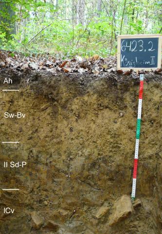 Das Foto zeigt ein Bodenprofil unter Wald. Es handelt sich um ein Musterprofil des LGRB. Das vier Horizonte umfassende Profil ist etwa 80 cm tief.