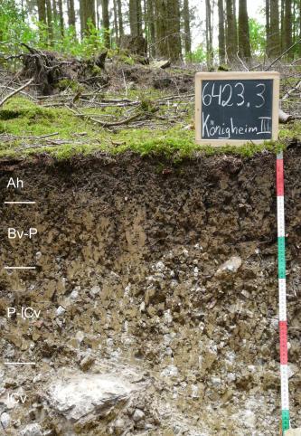 Das Foto zeigt ein Bodenprofil unter Wald. Es handelt sich um ein Musterprofil des LGRB. Das vier Horizonte umfassende Profil ist 75 cm tief.