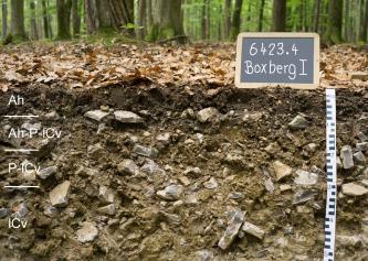 Das Bild zeigt ein aufgegrabenes Bodenprofil unter Wald. Das Profil ist durch eine beschriftete Kreidetafel als Musterprofil des LGRB ausgewiesen. Das braune, mit Steinen durchsetzte Profil ist 50 cm tief.