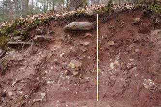 Das Bild zeigt ein Bodenprofil entlang eines Waldhanges. Das rötlich braune, oben steinige Profil ist über 140 cm tief. Am oberen Rand sind die Pflanzendecke sowie eng stehende Bäume sichtbar.