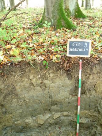 Das Foto zeigt ein Bodenprofil unter Wald. Es handelt sich dabei um ein Bodenprofil des LGRB. Das Profil ist etwa 80 cm tief.