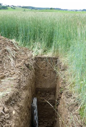 Das Foto zeigt ein sehr tief aufgegrabenes Bodenprofil inmitten eines grünen Getreidefeldes.