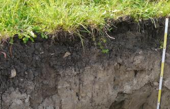 Das Foto zeigt ein Bodenprofil unter Acker. Das streifige, unter der Pflanzendecke dunkle Profil ist über 60 cm tief.