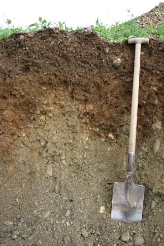 Das Foto zeigt ein Bodenprofil unter Acker. Das Profil ist in der oberen Hälfte dunkelbraun, in der unteren grau gefärbt. Ein Spaten rechts im Bild zeigt die Tiefe des Profils an.
