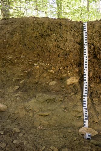 Das Bild zeigt ein Bodenprofil unter Wald. Das dunkelbraune Profil ist etwa 85 cm tief.