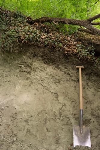 Das Bild zeigt ein Bodenprofil unter Wald. Äste, Blattwerk und Wurzeln begrenzen den oberen Teil des Profils. Ein angelehnter Spaten rechts im Bild zeigt die Tiefe.