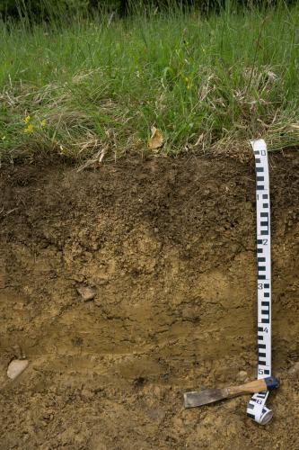 Unter einer Wiese ist ein Bodenprofil zu sehen. Am rechten Rand befindet sich ein Maßband und Werkzeug.