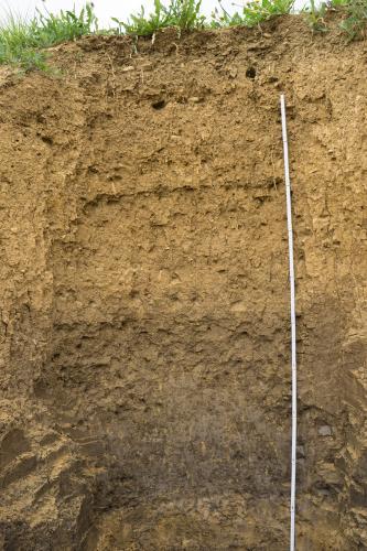 Das Foto zeigt ein Bodenprofil unter Acker. Das in der oberen Hälfte gelblich braune Profil ist über 1,90 m tief.