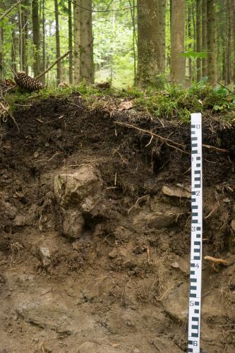 Im Vordergrund ist ein Bodenprofil aus geröllhaltigem, dunkel- bis hellbraunem Boden mit einem Maßstab rechts zu sehen. Im Hintergrund befindet sich Wald.