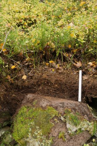 Das Foto zeigt ein dunkelbraunes Bodenprofil mit Wurzelwerk und dünnen Sträuchern. Im Vordergrund liegt ein größerer, mit Moos bedeckter Gesteinsblock.