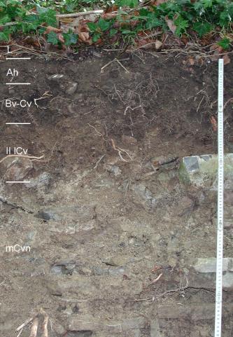 Das Foto zeigt ein Bodenprofil unter Pflanzenwuchs. Das dunkelgraue bis hellgraue Profil ist in fünf Horizonte untergliedert und etwa 1 m tief.