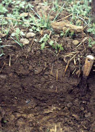 Nahaufnahme eines Bodenprofils unter Grünland. Ein Spachtel dient als Tiefenangabe.