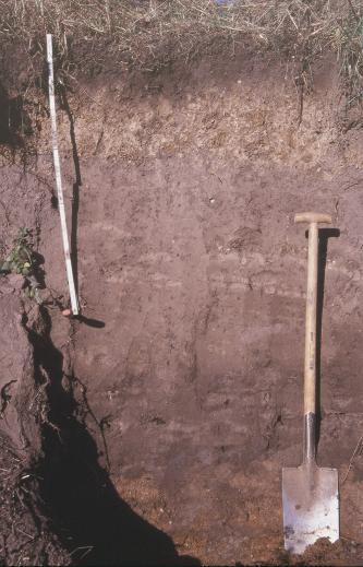 Das Foto zeigt ein Bodenprofil unter Grünland. Das Bodenprofil ist etwa 2 m tief. Zollstock und Spaten dienen als Größenangabe.