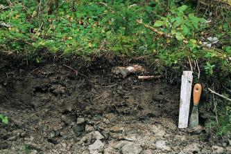 Das Foto zeigt ein Bodenprofil unter Wald. Das sehr flache Bodenprofil ist nur etwa 30 cm tief.