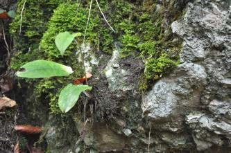 Nahaufnahme eines grauen Felsblocks, in dessen Vertiefungen sich Moos und dünner dunkler Boden festgesetzt haben. Links wächst sogar eine Pflanze aus diesem Boden.