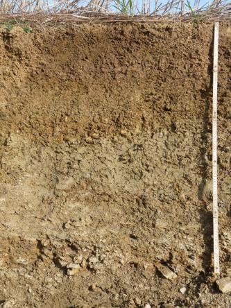 Das Foto zeigt ein Bodenprofil unter Acker. Das rötlich braune bis gelblich braune Profil ist über 1 m tief.