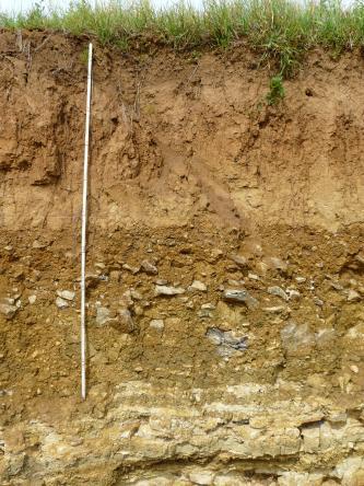 Das Bild zeigt eine über zwei Meter hohe, aus unterschiedlichen Schichten bestehende Boden-Profilwand. Die untere Hälfte ist dabei gelblich weiß bis gelblich braun und steinig, die obere Hälfte rotbraun und durchwurzelt.