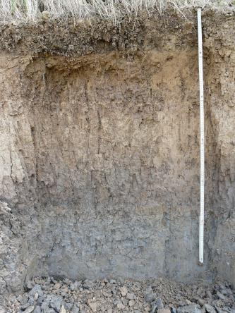 Das Foto zeigt ein Bodenprofil unter Acker. Das von rötlich braun in der oberen Hälfte zu graubraun wechselnde Profil ist über 1,20 m tief.
