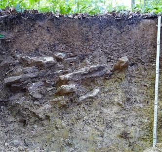 Das Foto zeigt ein Bodenprofil unter Wald. Das links steinführende Profil ist etwa 80 cm tief.