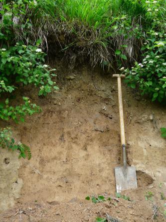 Das Bild zeigt ein Bodenprofil unter dichtem Pflanzenbewuchs.  Ein Spaten zeigt die Tiefe des rötlich braunen Profils an.