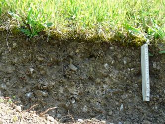 Nahaufnahme eines Bodenprofils unter Grünland. Der lockere, graubraun gefärbte Boden ist mit kleinen Steinen durchsetzt und nur etwa 30 cm tief.