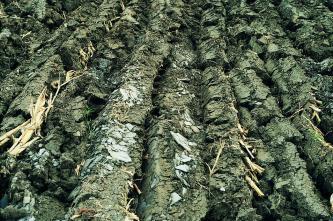 Nahaufnahme mehrerer Furchen eines umgepflügten Ackerbodens. Auf der grünlich braunen Oberfläche sind neben Pflanzenresten Bruchstücke von Schieferplatten erkennbar.