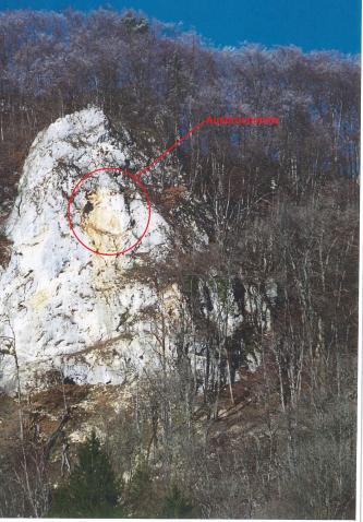 In der Bildmitte befindet sich ein großer, heller Felsen, welcher von kahlen Laubbäumen umgeben ist. Mit einem roten Kreis ist die Ausbruchstelle eines Felssturzereignisses gekennzeichnet.