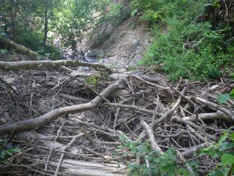 Das Bild zeigt ein Bachbett, welches durch eine große Ansammlung von Totholz im Vordergrund des Bildes blockiert wird. Der Bach befindet sich im Wald.