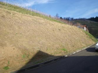 Links befindet sich ein Straßenanschnitt, an dem braunes Material zum Vorschein kommt. Er ist spärlich bewachsen. Rechts befindet sich eine Straße, im Hintergrund Weinreben.