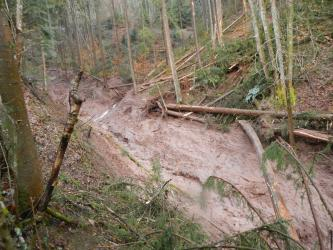 Das Bild zeigt einen bewaldeten Hang, in den sich mittig eine Rinne aus talabwärts geflossenen Schlammmassen eingeschnitten hat.