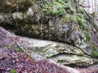 Das Bild zeigt zwei übereinanderliegende Schichten von unten glattem und oben knolligem Gestein. An den Rändern wachsen Moose und Flechten.