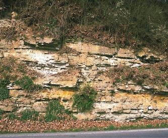 Man sieht eine zerklüftete, steile Straßenböschung, die zudem noch stark bewachsen ist. Das erkennbare Gestein hat weißliche bis hellbraune Farben.