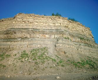 Das Bild zeigt eine Steinbruchwand mit oben gelblichen, feinbankigen Gesteinslagen. Nach unten hin sind die Schichten hellbraun und teilweise bewachsen.
