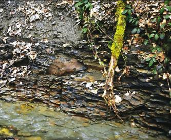 Blick auf das feinscherbige, steile Ufer eines Baches. Das dunkelgraue Gestein ist von Pflanzen bewachsen.
