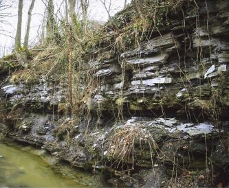 Blick auf das steile, verwachsene Ufer eines Baches. Das graue Gestein liegt in dünnen Bänken aufeinander und hat Nischen gebildet.